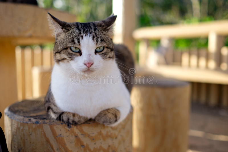Straßenkatze in Japan stockfoto