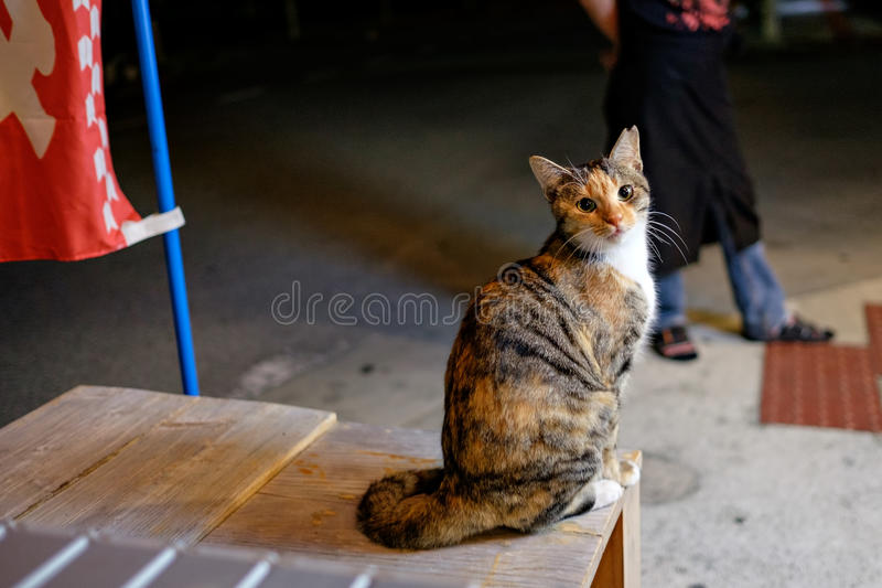 Straßenkatze in Naha stockfoto