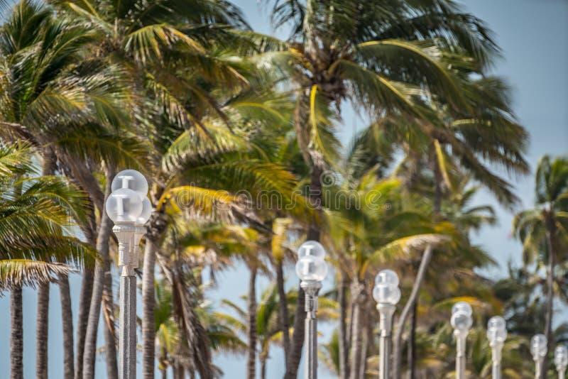 Stra?enlaternen und Palmen Hollywood-Strand stockbild