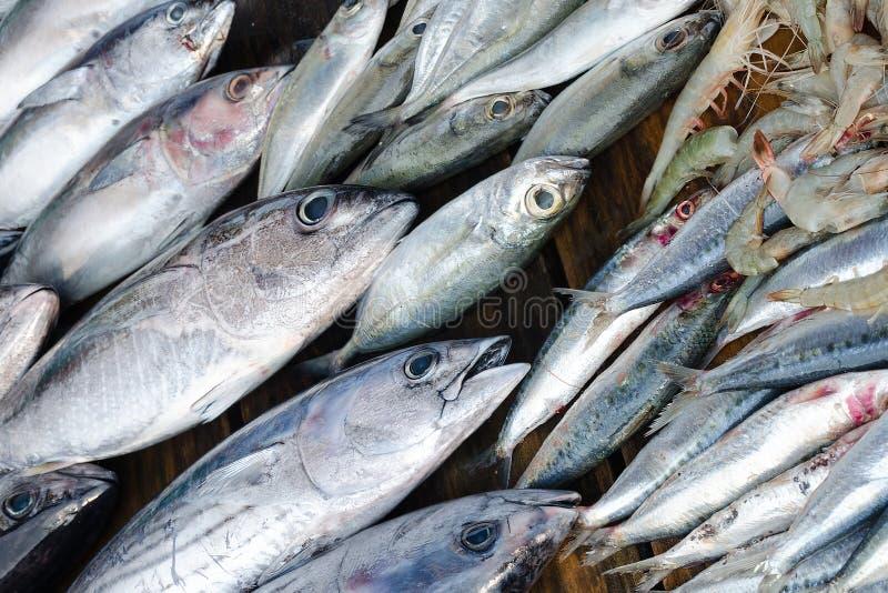 Straßenmarkt mit frischen Fischen Anzeige mit Thunfisch, Sardinen und Garnelen lizenzfreie stockfotos