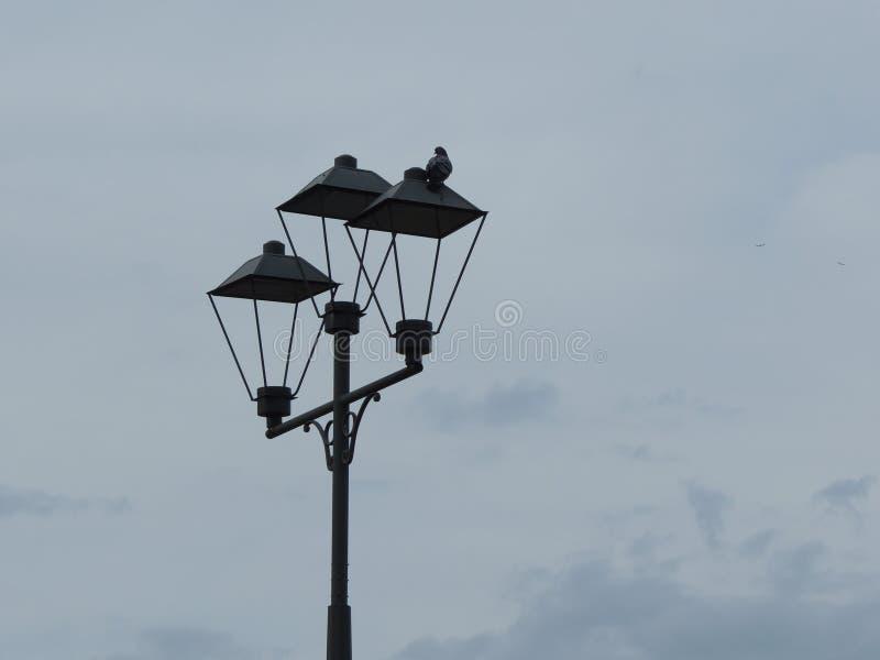 Straßenpfosten und die Taube lizenzfreie stockfotos