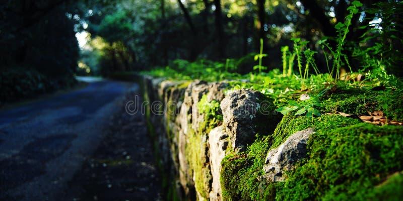 Straßensteinzaun bedeckt im Moos und im Gras Italien lizenzfreie stockfotos