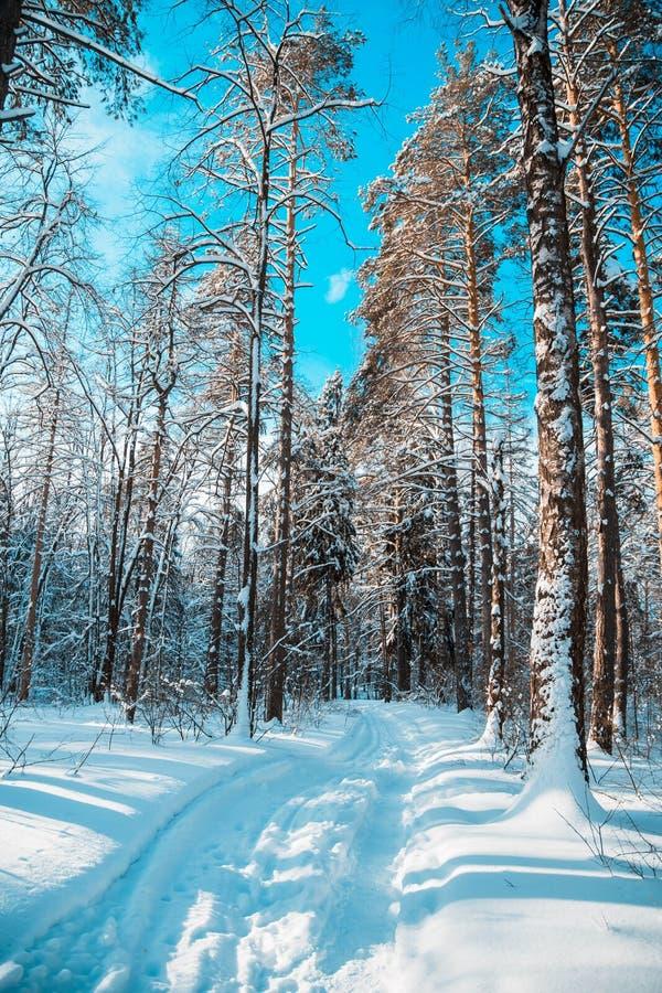 Straße im Winterwald lizenzfreie stockfotografie
