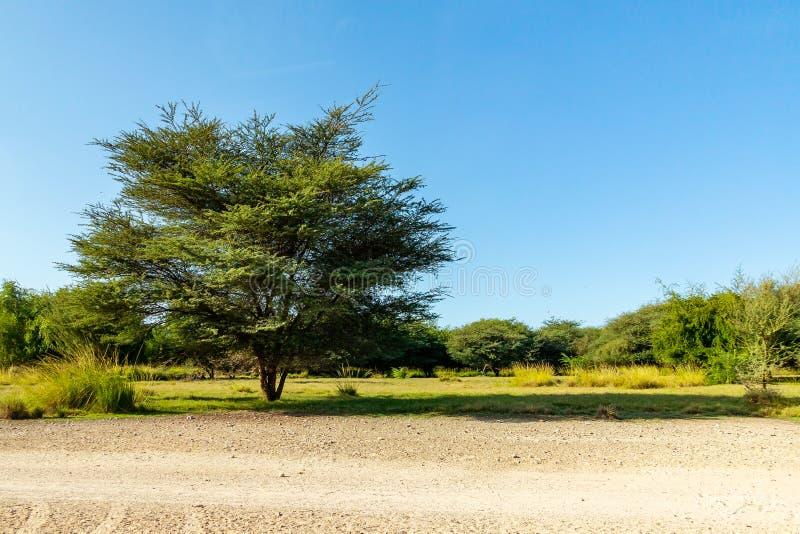 Straße zu Safari Park auf Sir Bani Yas Island, Abu Dhabi, Arabische Emirate lizenzfreie stockfotografie