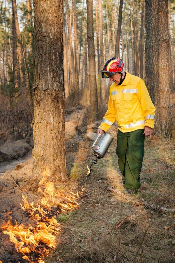 Strażak używa kontrolowanego ogienia w lesie zdjęcia royalty free