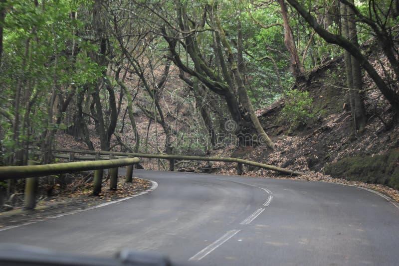 Straat aan het mooie laurierbos met vele grote groene bemoste bomen in het noorden van Tenerife in de Anaga-Bergen royalty-vrije stock afbeeldingen