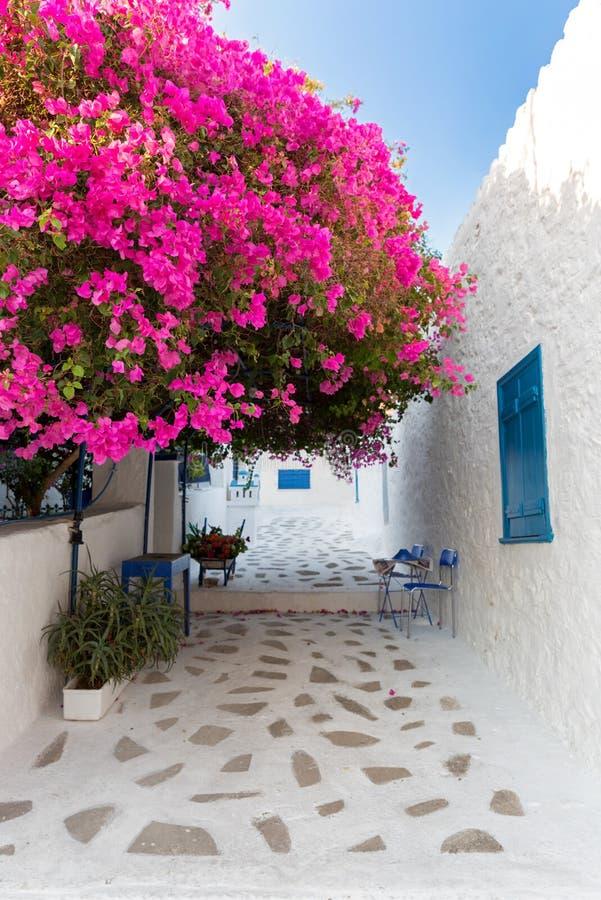 Straat bij het dorp van Perdika op Aegina-Eiland in Griekenland stock afbeelding