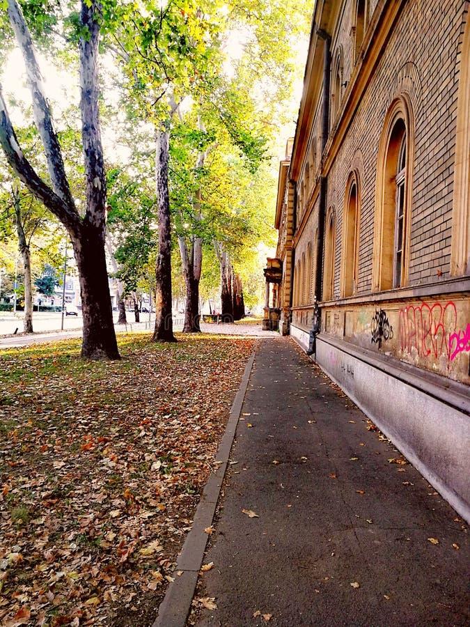 Straat in de herfst stock foto