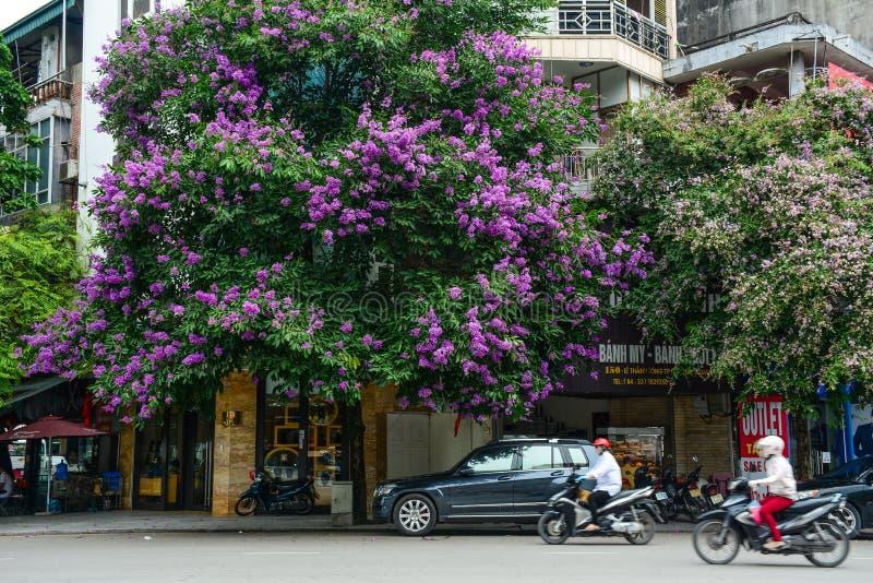 Straat met de bloemen van de Rouwbandmirte stock afbeelding