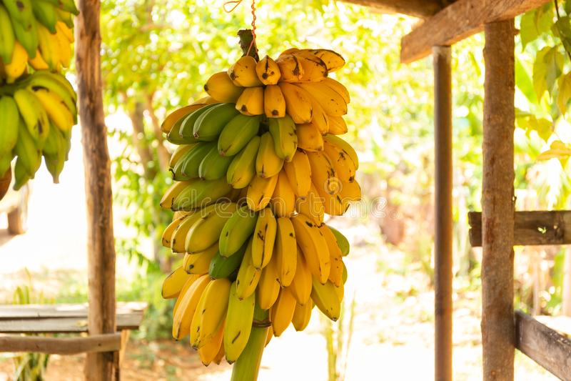 Straatbox met bossen van bananen royalty-vrije stock afbeeldingen