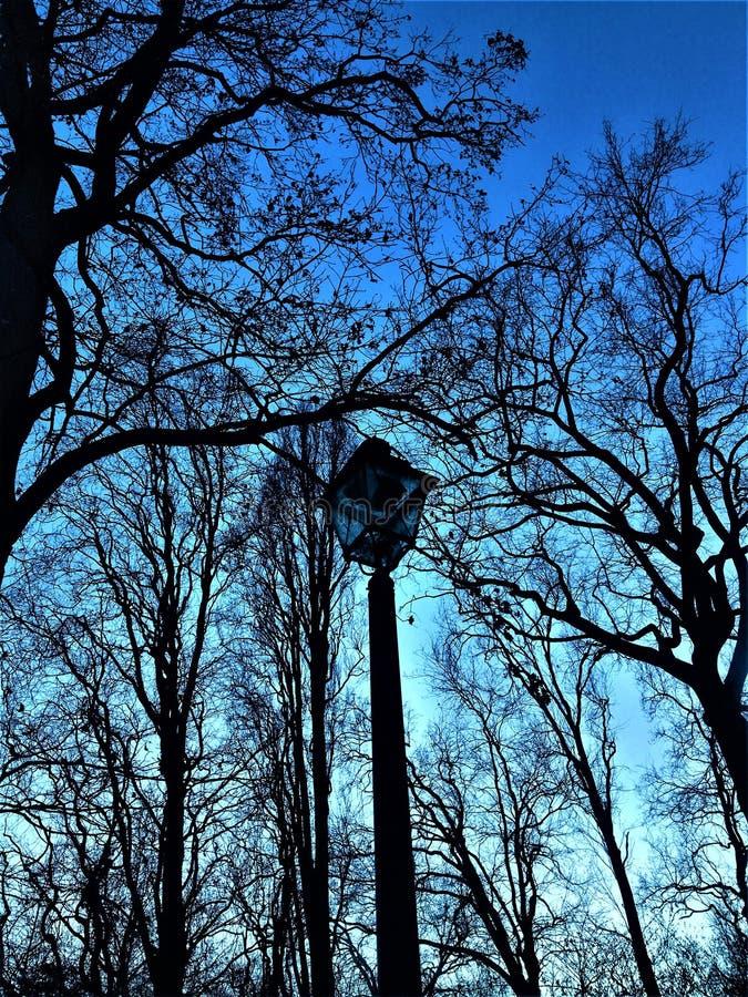 Straatlantaarn, bomen en zwarte vormen royalty-vrije stock afbeelding