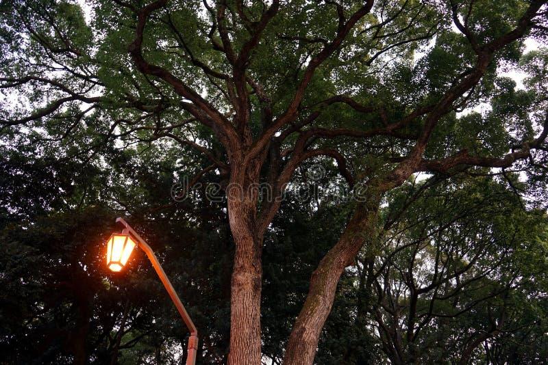 Straatlantaarn onder grote boom stock afbeelding