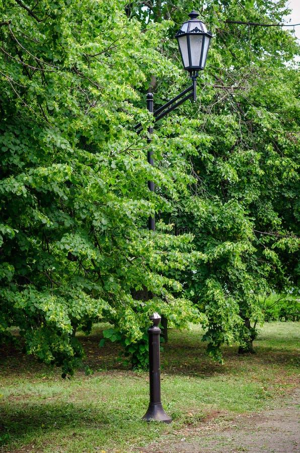 Straatlantaarn tegen de achtergrond van de Majesteit en de rel van groen in de de lentestad stock fotografie