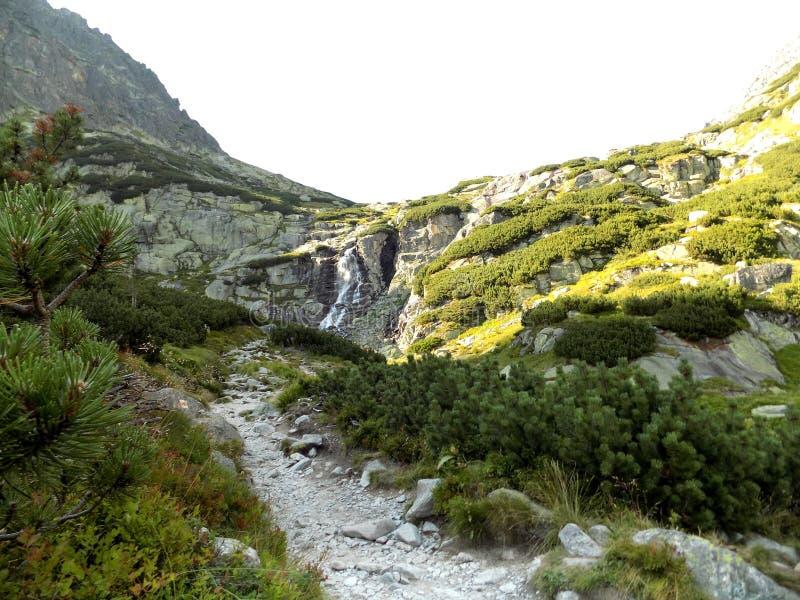 Strabiliante paesaggio naturale delle montagne rocciose, degli alberi e delle piante fotografia stock