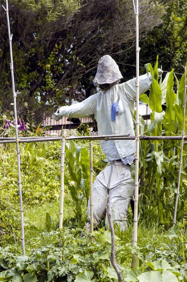 Strach na wróble chroni veges zdjęcie royalty free