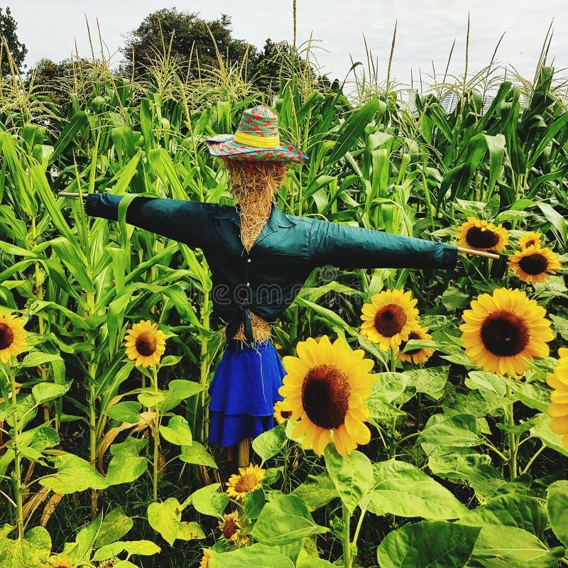 Strach na wróble pozycja przeciw roślinom w ziemi uprawnej zdjęcia stock