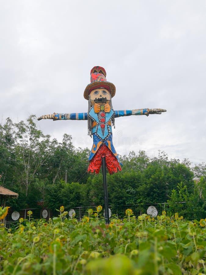 Strach na wróble strzeżenia słonecznikowi pola, Tajlandia obrazy royalty free