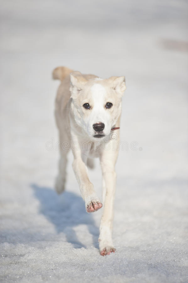 strachu psi bieg obraz stock