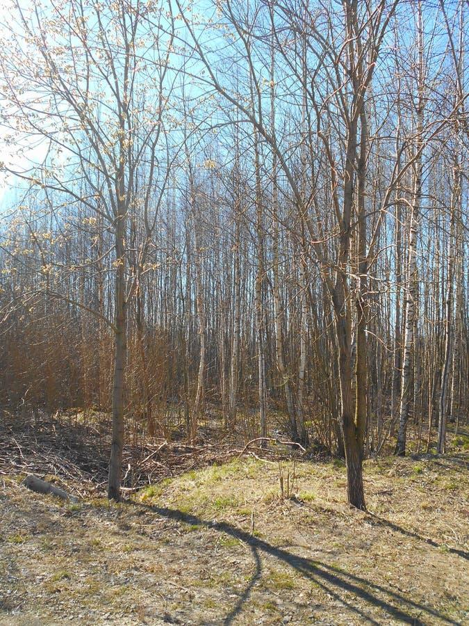 straciliśmy lasu zdjęcie stock