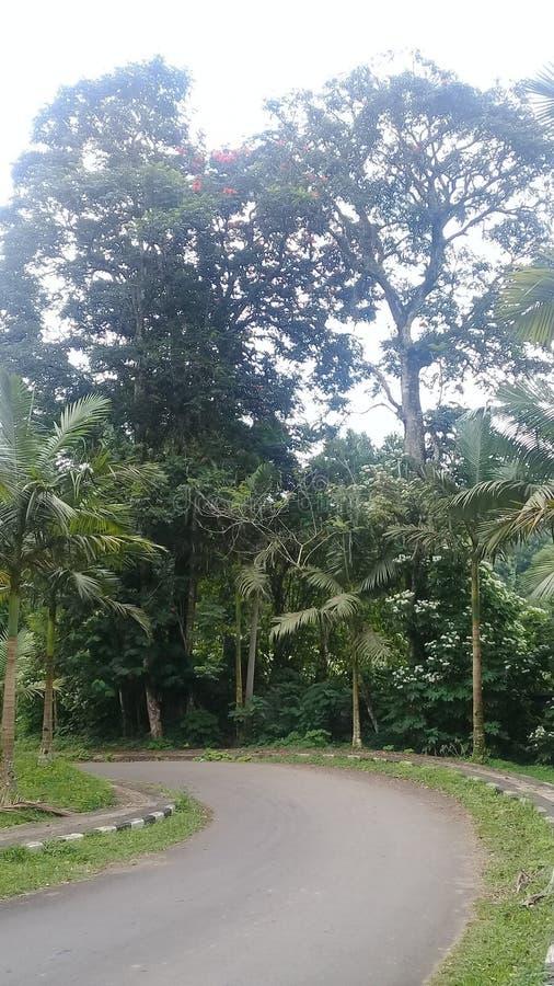 Strada accantonante nell'area del giardino di Bali fotografia stock libera da diritti