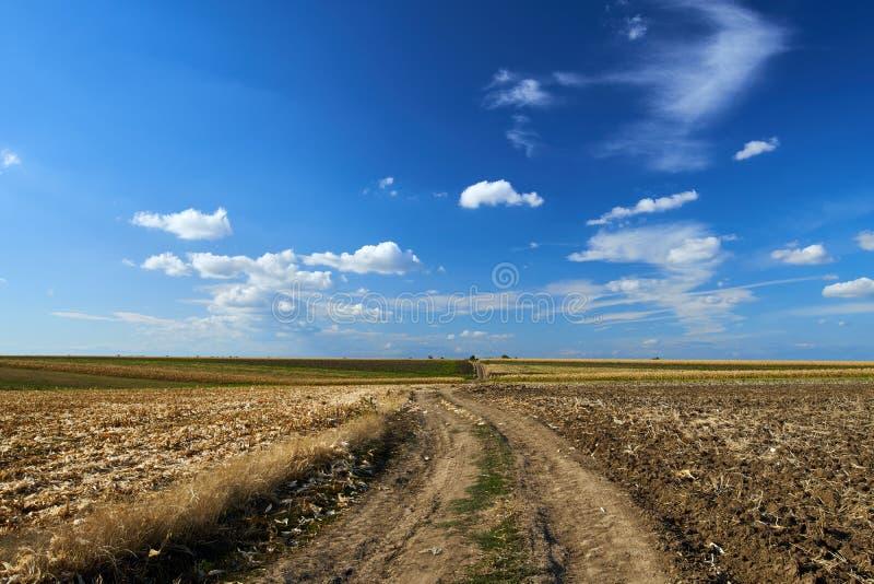Strada agricola attraverso i campi immagini stock libere da diritti