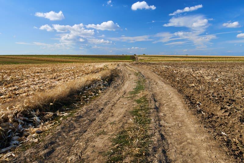 Strada agricola attraverso i campi immagine stock libera da diritti