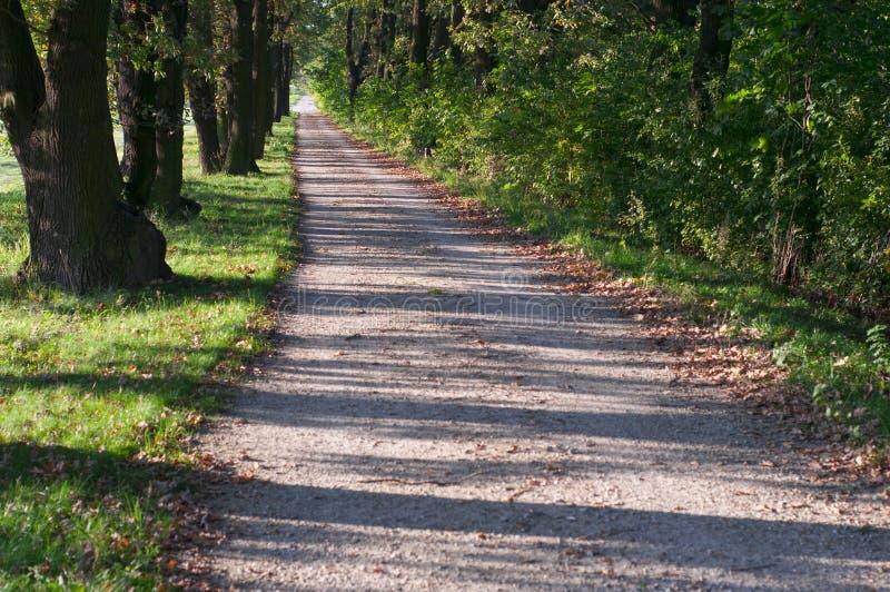 Strada al sole fra gli alberi Wroclaw, Polonia immagini stock libere da diritti