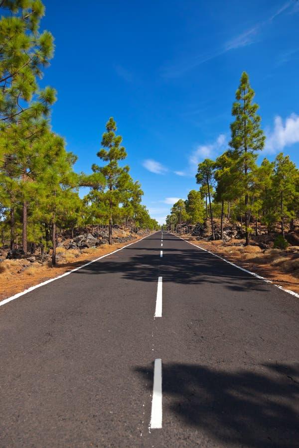 Strada al vulcano Teide all'isola di Tenerife - canarino fotografia stock libera da diritti