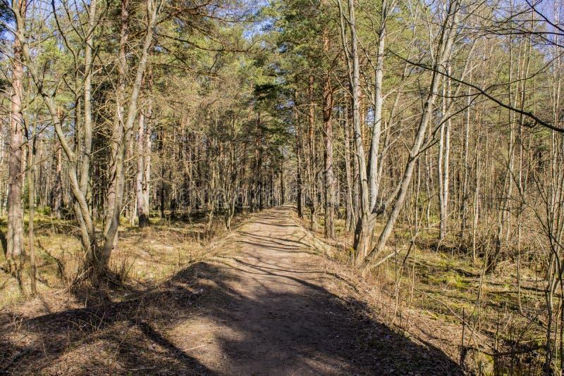 Strada alla foresta fotografia stock