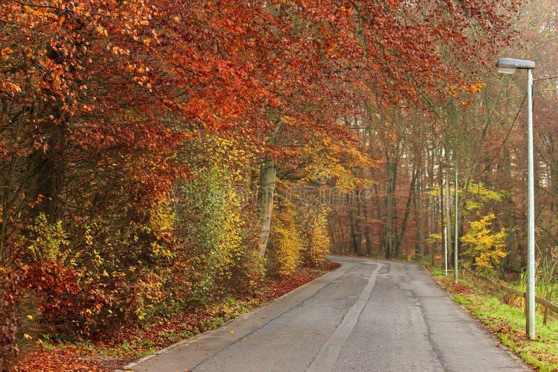 Strada alla foresta variopinta arrugginita di autunno fotografia stock