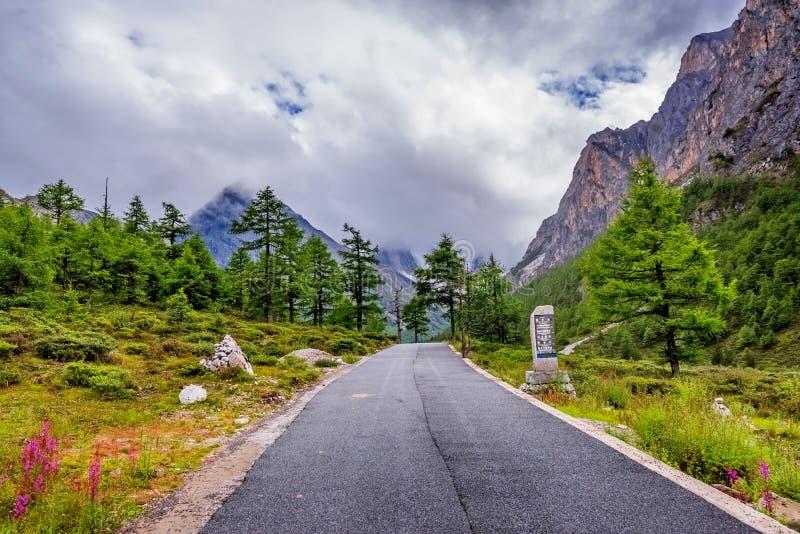 Strada alla montagna della neve con l'abetaia fotografie stock libere da diritti