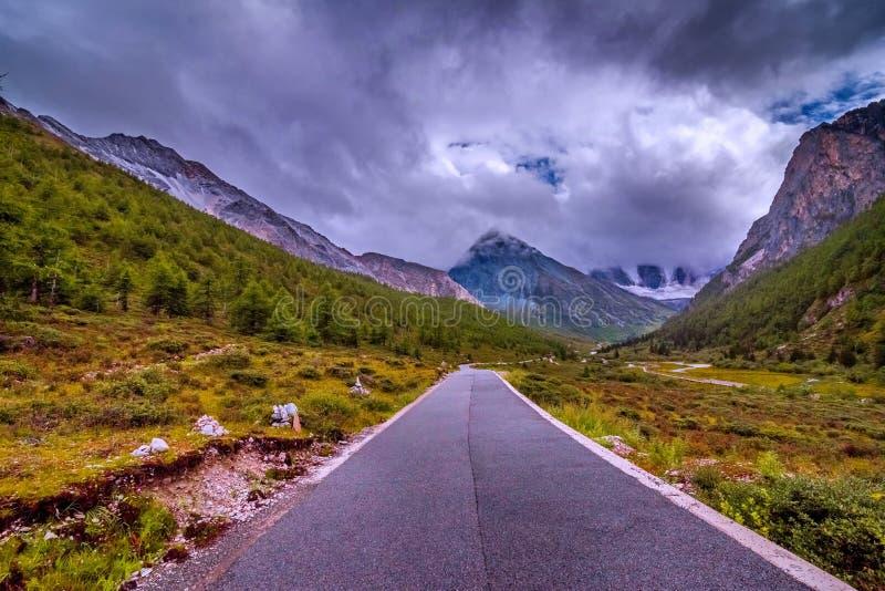Strada alla montagna della neve con l'abetaia immagine stock libera da diritti