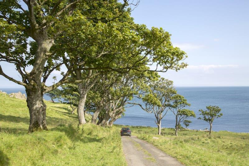 Strada allineata albero alla spiaggia di Murlough; Contea Antrim fotografia stock