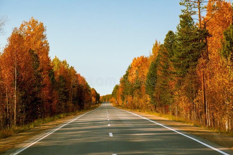 Strada asfaltata con il divisorio mediano intermittente lungo la foresta di autunno fotografie stock libere da diritti