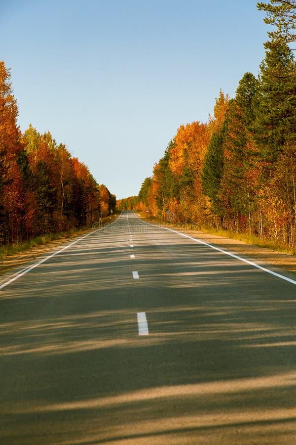 Strada asfaltata con il divisorio mediano intermittente lungo la foresta di autunno immagine stock libera da diritti
