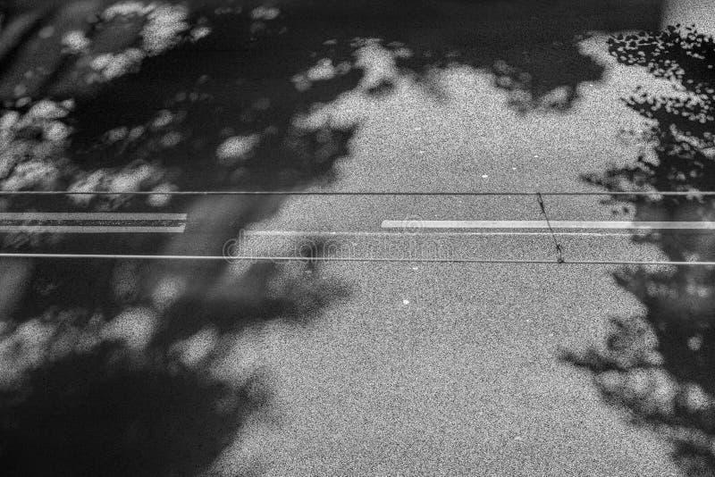 Strada asfaltata ed ombra degli alberi fotografie stock libere da diritti