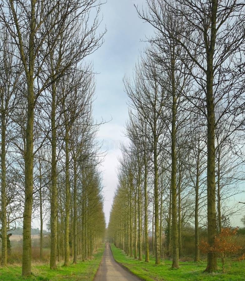 Strada attraverso gli alberi immagine stock