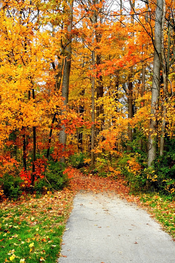 Strada attraverso gli alberi di autunno fotografia stock