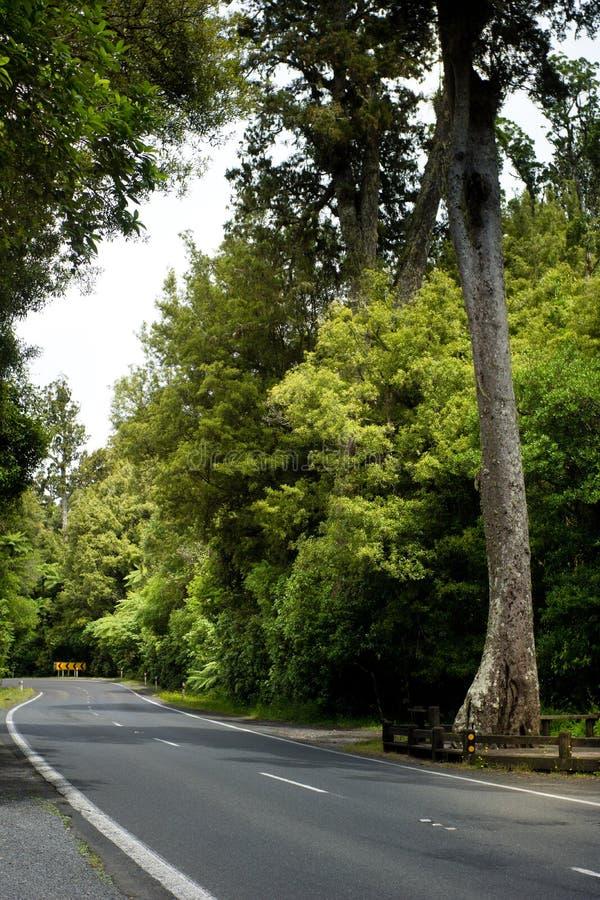 Strada attraverso il cespuglio del nativo della Nuova Zelanda fotografia stock