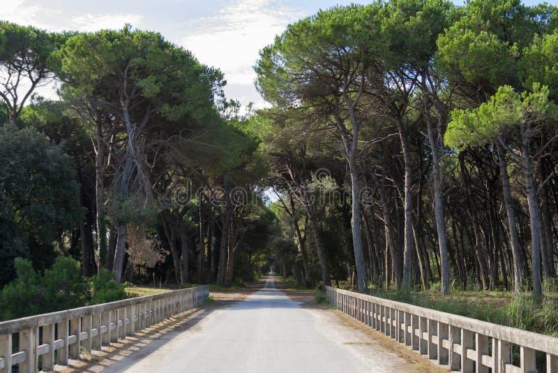 Strada attraverso il parco regionale di San Rossore, Italia immagine stock