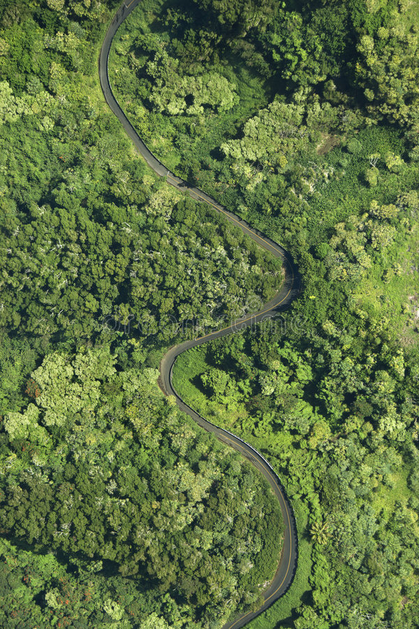 Strada attraverso la foresta. fotografia stock libera da diritti