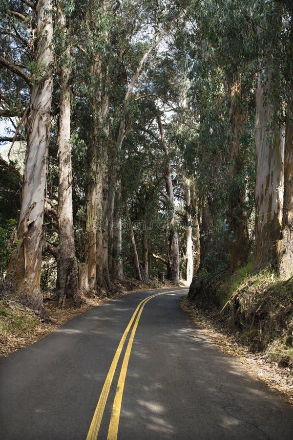 Strada attraverso la foresta scenica. fotografie stock