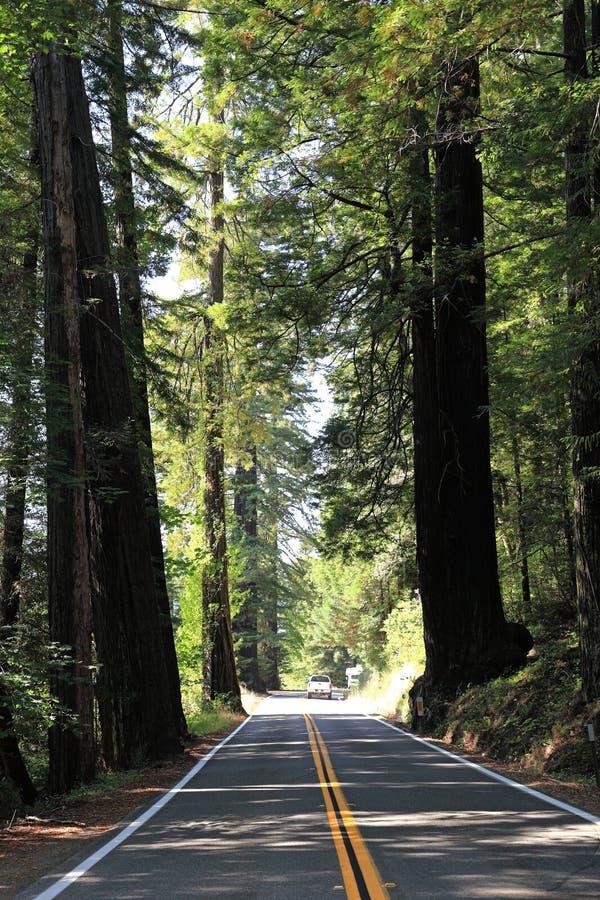 Strada attraverso le sequoie fotografia stock libera da diritti
