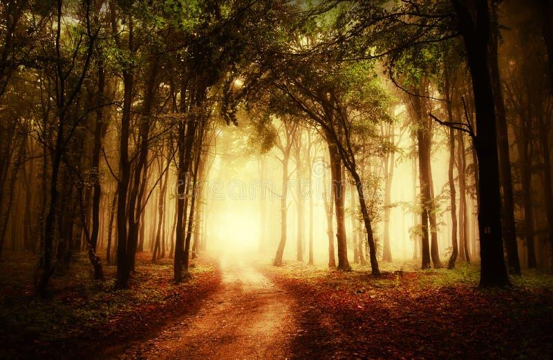 Strada attraverso una foresta dorata all'autunno immagini stock