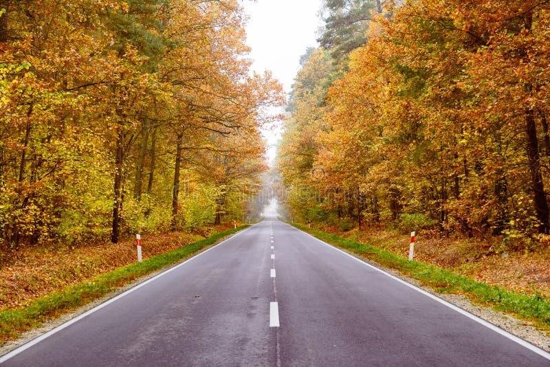 Strada bagnata di autunno attraverso la foresta fotografie stock libere da diritti