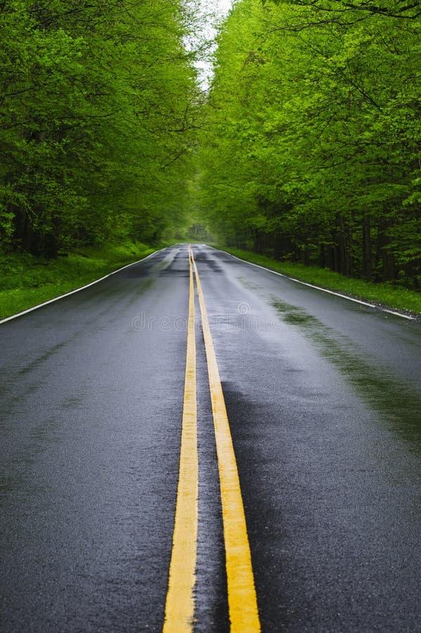 Strada bagnata diritta fotografia stock libera da diritti