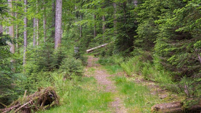 Strada bloccata attraverso la foresta immagini stock libere da diritti