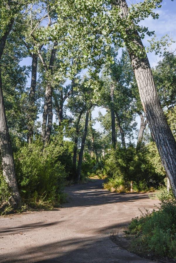Strada boscosa fotografia stock libera da diritti