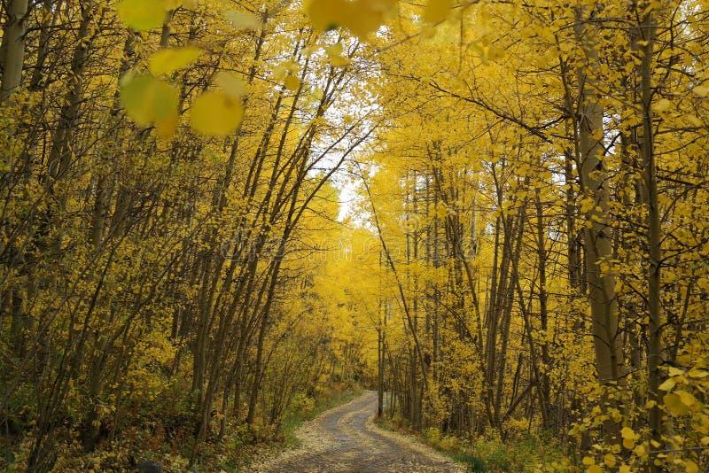 Strada calma nelle foglie di caduta del Colorado Rocky Mountains fotografie stock