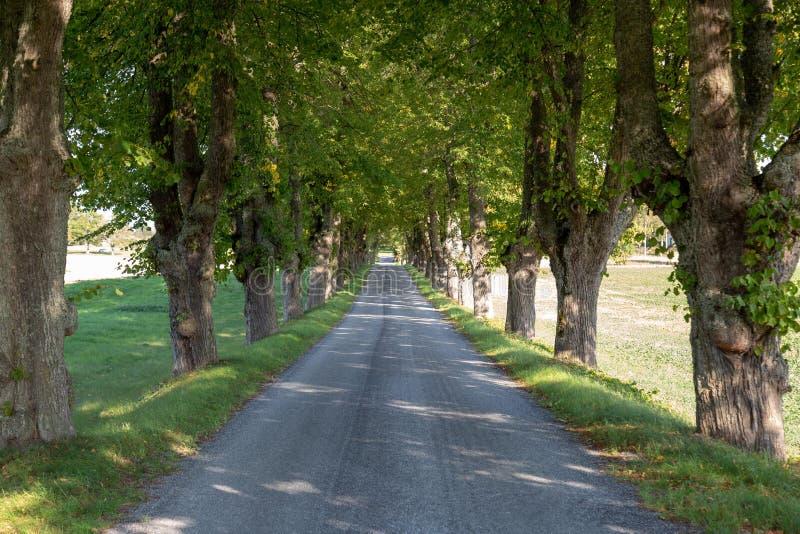 strada campestre, albero allineato fotografia stock